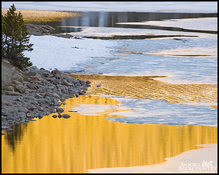 Small Tree Reflecting on Tioga Lake