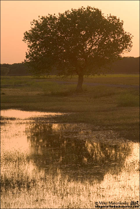 Tree at the Merced NWR