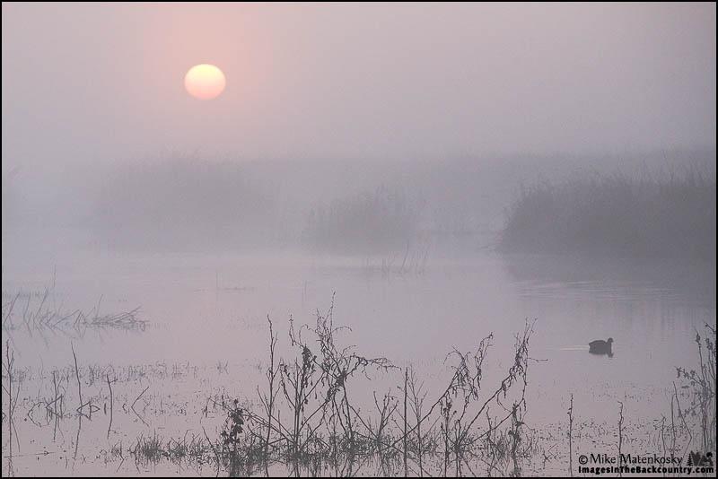 Merced NWR at Sunrise