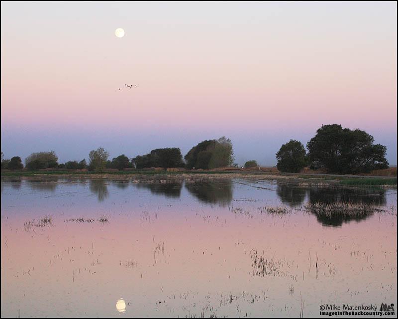 Full Moon Over Merced NWR