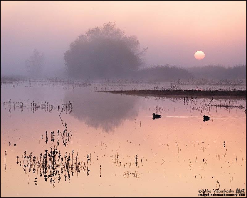 Sunrise at Merced NWR