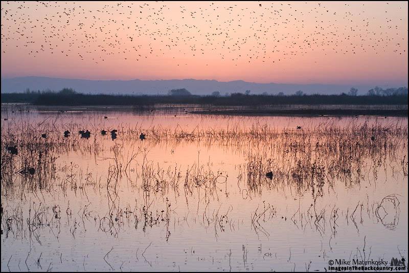 Small Birds at Sunrise