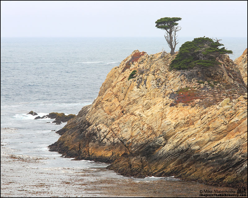 A picture of Cyprus tree on a rock at Point Lobos State Reserve.