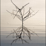 Twigs in the Water