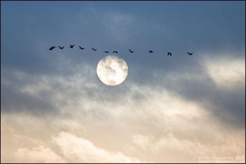 Sandhill Cranes flying above the sun