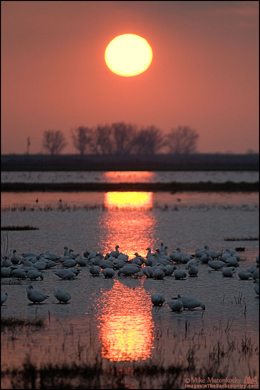 Sunset picture of Geese