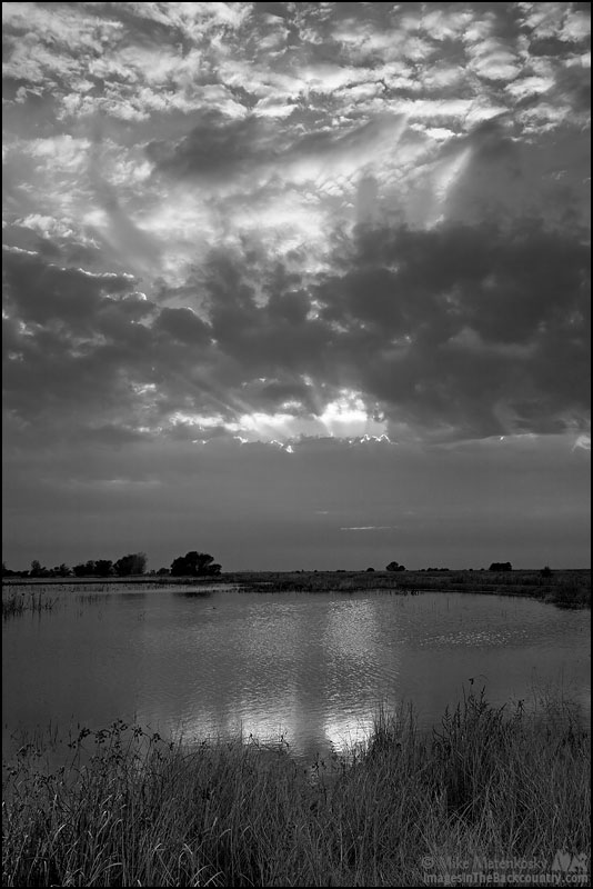 A black and white picture after sunrise at the local refuge.