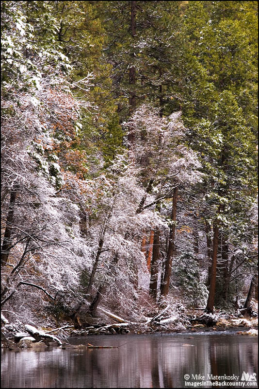 A picture of trees with snow along the Merced River.