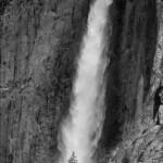 A tree under Yosemite Falls
