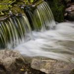 Fern Springs in Yosemite