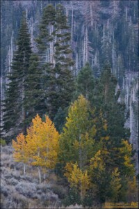 Fall colors on the June Lake Loop.