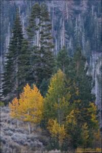 Fall colors on the June Lake Loop.
