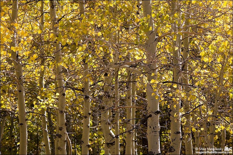 IMAGE: http://www.imagesinthebackcountry.com/wordpress/wp-content/uploads/2017/10/fall-colors-101217-21-web.jpg
