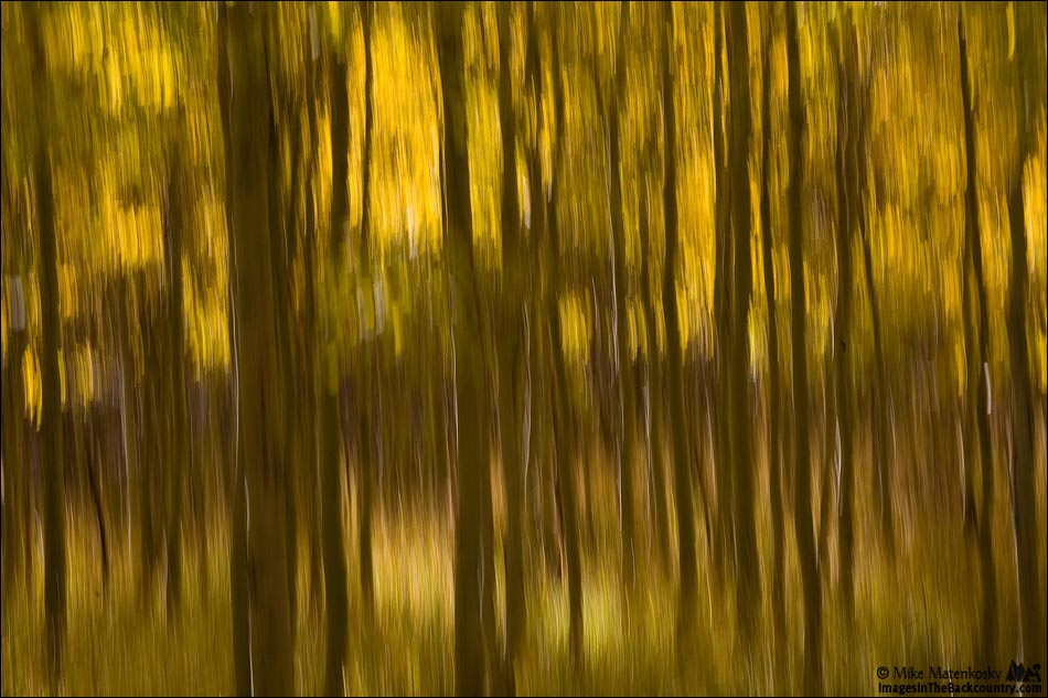 IMAGE: http://www.imagesinthebackcountry.com/wordpress/wp-content/uploads/2017/10/fall-colors-101217-27-web.jpg