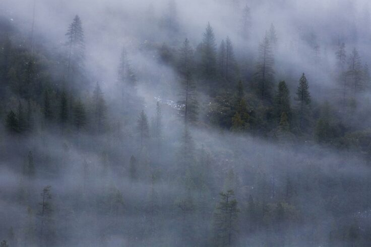 Trees in the fog at Tunnel View, Yosemite