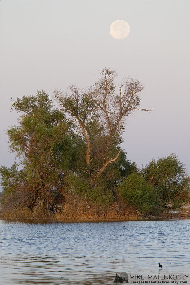 Setting Full Moon at the Merced NWR